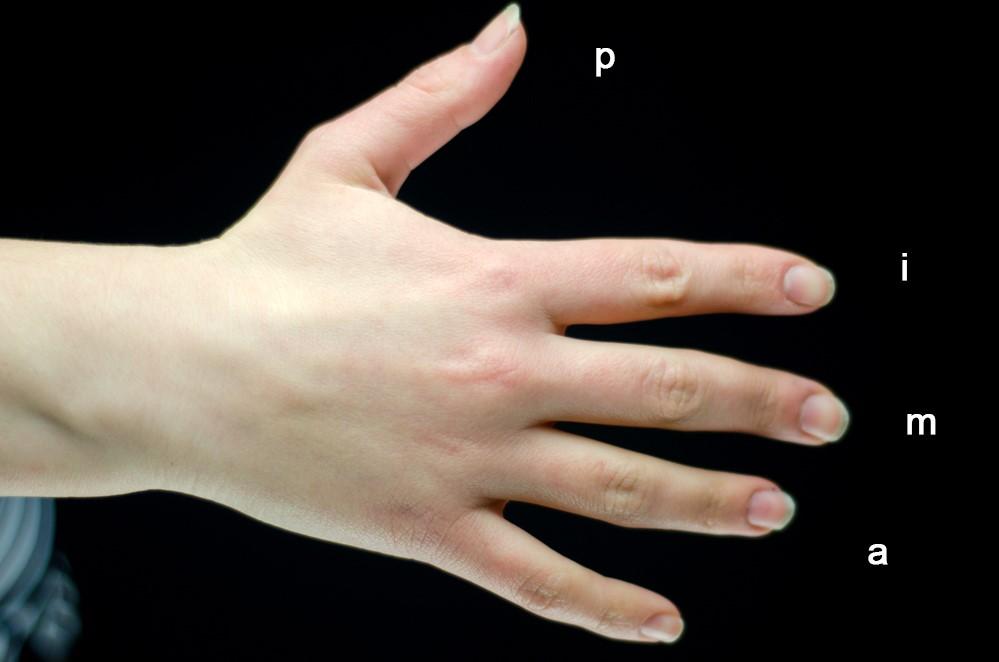 Обозначение пальцев рук для гитариста